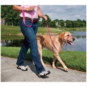 Dog walking Boston