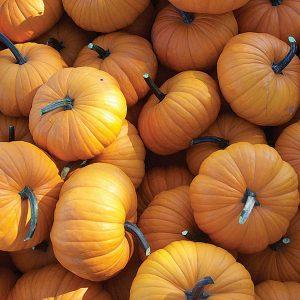doula-pumpkin